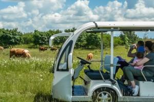 Visite del Parco Rurale in Agribus elettrico