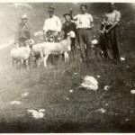Gregge pecore - 1951