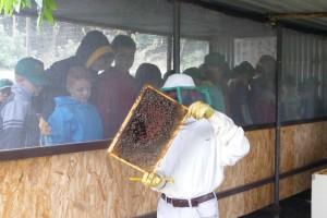 Il mondo dell'ape