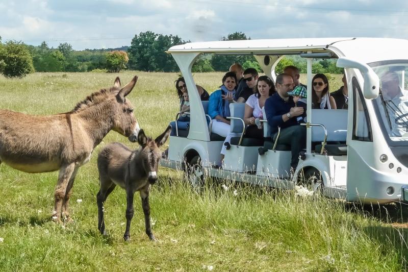 Visita del parco Rurale in Agribus elettrico