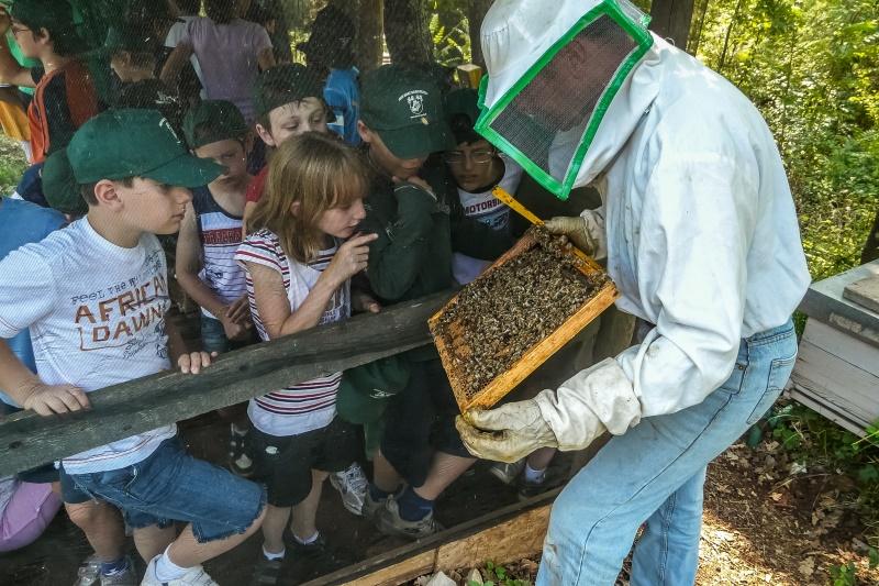 Visita dell'apiario