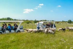 Visita in Agribus elettrico del Parco Rurale