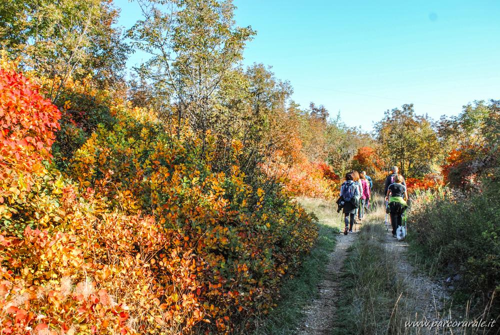 nordic walking sentieri Carso in autunno